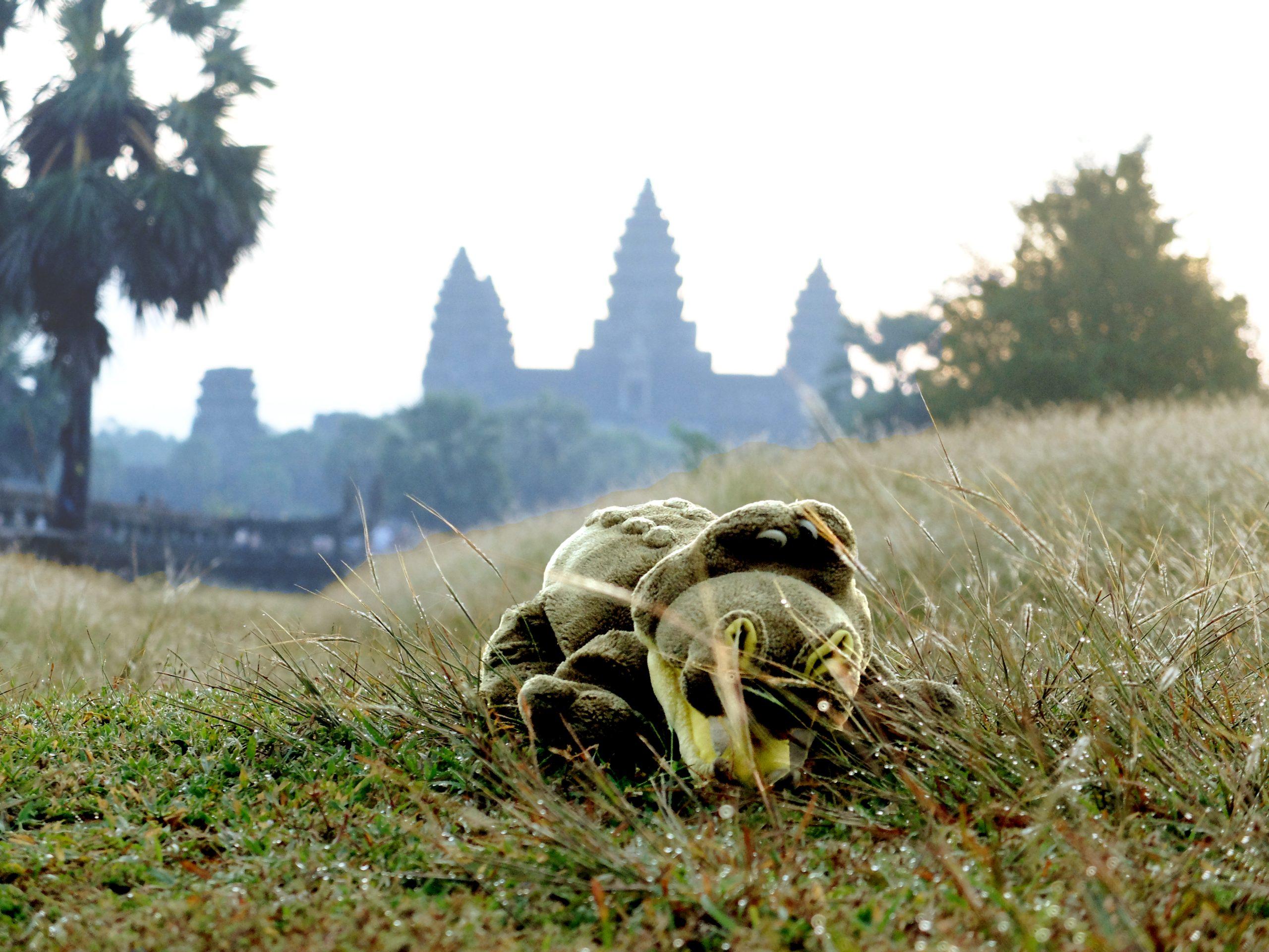 angkor bat